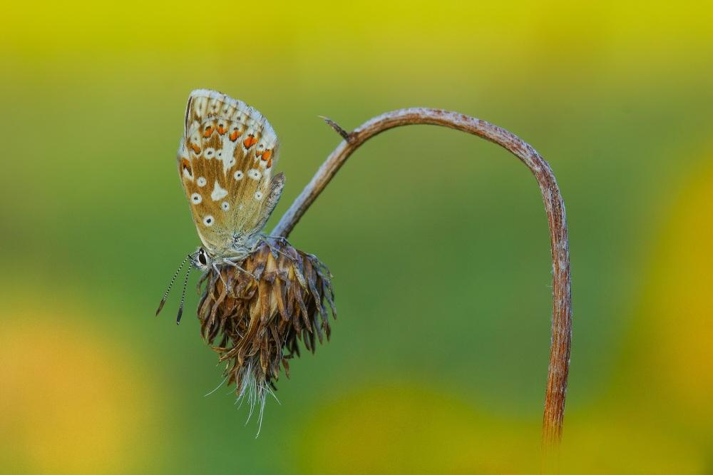 butterfly-1643510